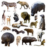 Hippo and other African animals. Isolated. Over white background royalty free stock photography