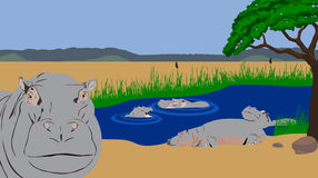 Hippo pool. Illustration of a hippo pool Hippo head in front of the picture. In background hippos swimming and resting Royalty Free Stock Images