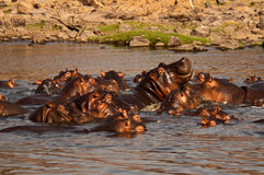Hippo Pool Royalty Free Stock Images