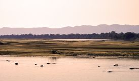 Hippo river Royalty Free Stock Images