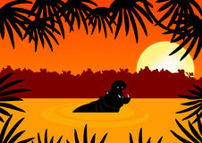 Hippo in sunset Royalty Free Stock Photos