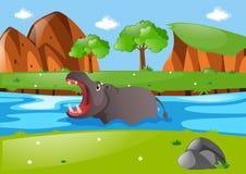 Hippo swimming in the river Stock Photo