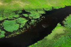 Hippo in water and Aerial landscape in Okavango delta, Botswana. Lakes and rivers, view from airplane. Green vegetation in South A Royalty Free Stock Images