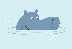 Hippo in water. Big fat hippopotamus  in swamp. Cute hippo head Royalty Free Stock Image