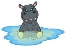Hippo on the water. Smiling hippo sitting on the blue water Stock Photography