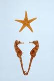 Hippocampe et étoiles de mer Images libres de droits