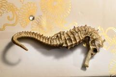 Hippocampe, squelette d'un hippocampe photo libre de droits