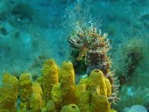 hippocampus Fotografia Stock