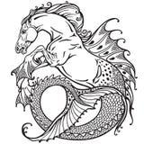 Hippocampus black and white. Hippocampus or kelpie mythological sea-horse . Black and white image Stock Photos