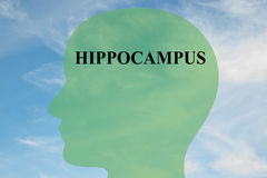 Hippocampus - brain anatomy concept. Render illustration of HIPPOCAMPUS script on head silhouette, with cloudy sky as a background Royalty Free Stock Photography
