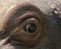 Hippoeye Stock Images