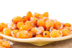 Hippophae rhamnoides Royalty Free Stock Photo