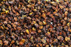Hippophaes pattern. Traditional hippophaes dried fruit pattern Royalty Free Stock Photo