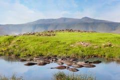 Hippopool in serengeti nationaal park Savanne en safari royalty-vrije stock afbeelding