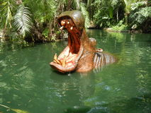 hippopotame Image stock