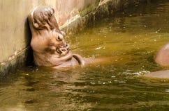 Hippopotame dans l'eau Image stock