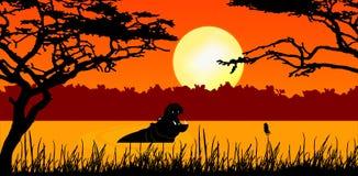 Hippopotame dans le coucher du soleil Photos stock