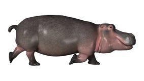 hippopotame du rendu 3D sur le blanc Photos libres de droits