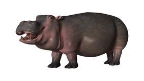 hippopotame du rendu 3D sur le blanc Image libre de droits