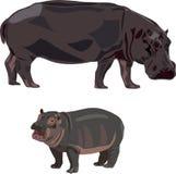 Hippopotames africains Photos libres de droits