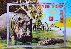 Hippopotamo de la Guinea Ecuatorial de África del sello Imagen de archivo libre de regalías