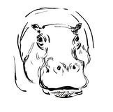 Hippopotamus Photo libre de droits