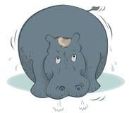 Hippopotamus Imágenes de archivo libres de regalías