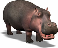 Hippopotamus. Funny hippopotamus Royalty Free Stock Photos