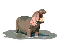 Hippopotamus. Angry hippo standing in water Stock Photo