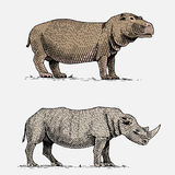 Hippopotamus and black or white rhinoceros hand drawn, engraved wild animals in vintage or retro style, african zoology Royalty Free Stock Images
