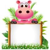 Hippopotamus bonito com placa Imagem de Stock