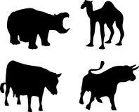 Hippopotamus, buffalo; cow and camel Stock Photos