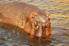Southern african animals Royalty Free Stock Photos