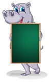 A hippopotamus holding an empty board Stock Photo