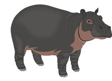 Hippopotamus, illustration Stock Photos