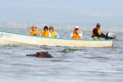Hippopotamus, Lake Naivasha Royalty Free Stock Image