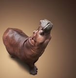 The hippopotamus lifted the head up Royalty Free Stock Photography