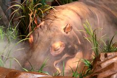 Hippopotamus  At The Rainforest Cafe, Nashville Tennessee Royalty Free Stock Image
