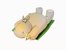 Hippopotamus relaxing Royalty Free Stock Photos