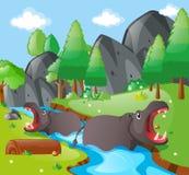 Hippopotamus in the river Royalty Free Stock Photo