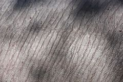 Hippopotamus Skin Royalty Free Stock Photo