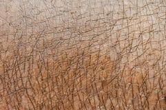 Hippopotamus skin texture Stock Photos