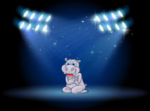 A hippopotamus at the stage with spotlights Stock Images