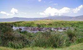 Hippos λιμνών Στοκ Φωτογραφίες