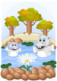 Hippos admire unusual camomile Stock Images