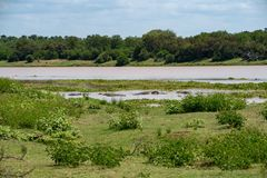 Hippos in Africa. Inside a river surrounded by a beautiful african landscape stock photo