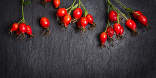 Hips berries on dark slate background, banner Stock Images