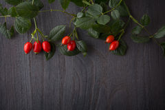 Hips berries Royalty Free Stock Photos