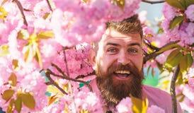 Hipster στο ρόδινο πουκάμισο κοντά στον κλάδο του sakura Έννοια αρωματοποιιών Άτομο με τη γενειάδα και mustache στο πρόσωπο χαμόγ στοκ φωτογραφία με δικαίωμα ελεύθερης χρήσης