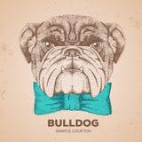 Hipster animal bulldog. Hand drawing Muzzle of animal dog. Hipster animal bulldog. Hand drawing Muzzle of animal Stock Photos